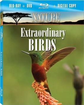 Nature:  Extraordinary Birds