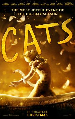 Koty / Cats