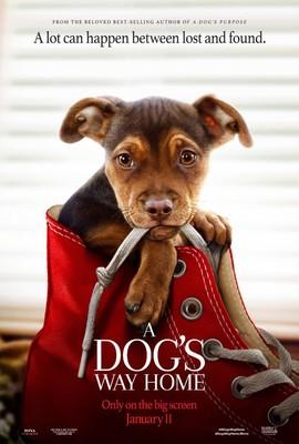 O psie, który wrócił do domu / A Dog's Way Home